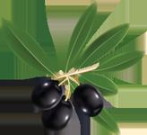 Oliven klassisch klein